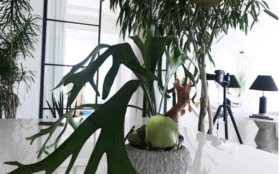 Sala Home Styling